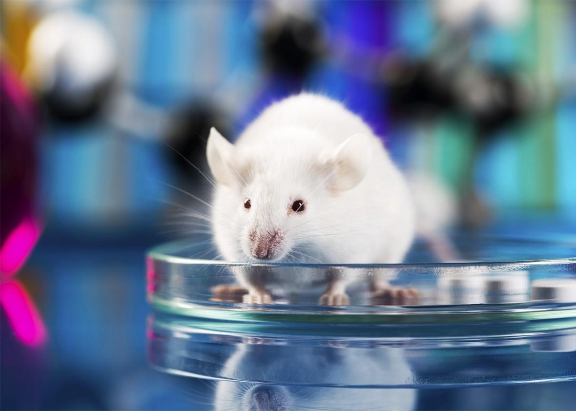 160405_SCI_Animal-Welfare-Act.jpg.CROP.promo-xlarge2